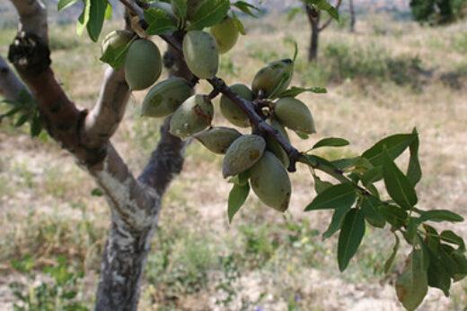 Kayapinar - grönsakslandet i Turkiet