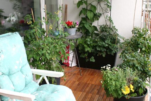 Grön balkong odla